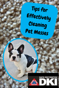 pet messes