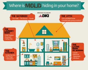 where is the Mold in your Home