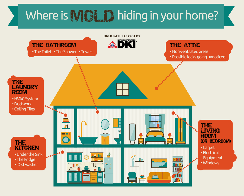 Different Mold Locations In Your Home