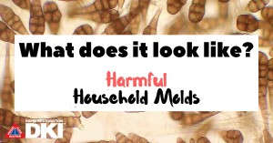 Household molds